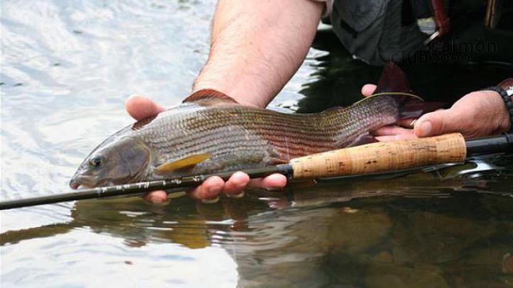 Pesca en el Río San