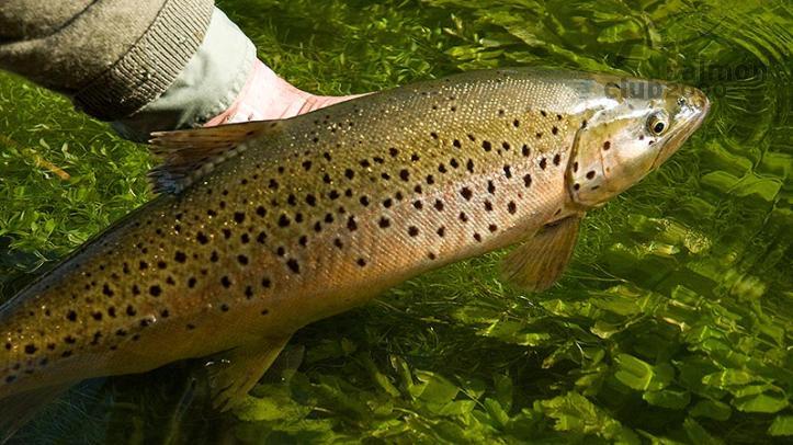 Pesca en inglaterra