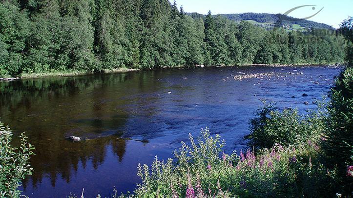 Río Orkla a pocos metros del Orklagaard Lodge
