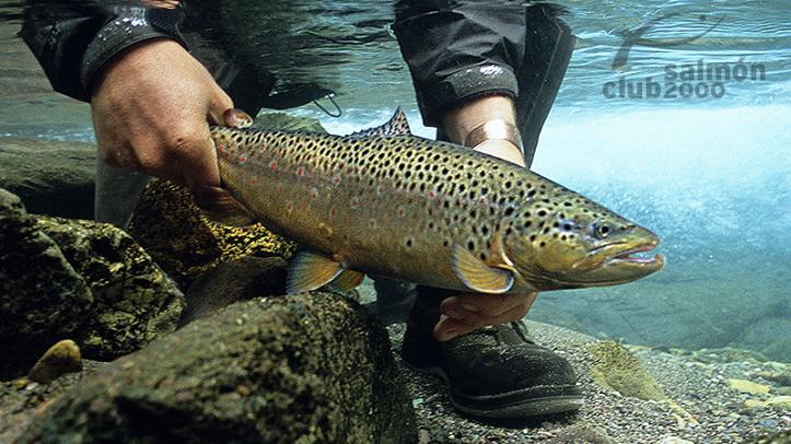 Pesca en el circuito del Lodge Cinco Rios Chile