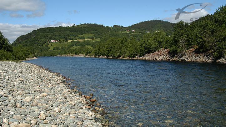 Río Orkla