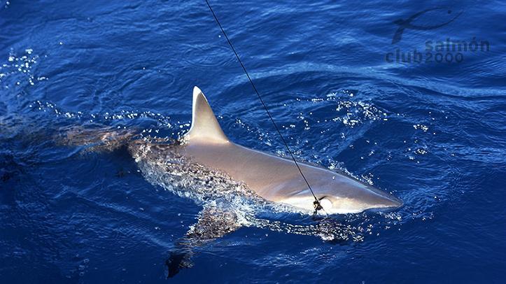 Viaje de pesca Madagascar