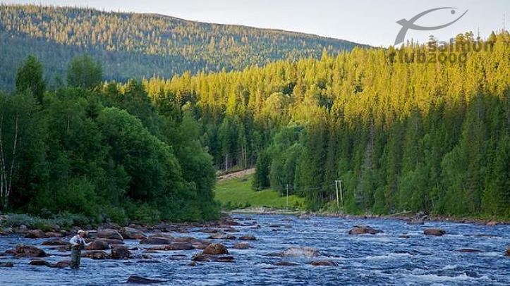 Sección superior del río Gaula