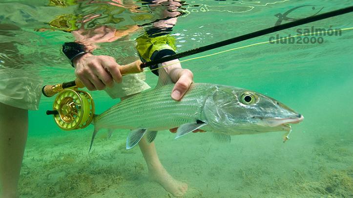 Pesca del Macabí con Bair´s Lodge, en la isla de South Andors, Bahamas