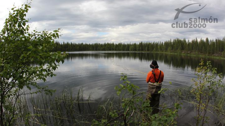 Pesca en Suecia Abborrträsk