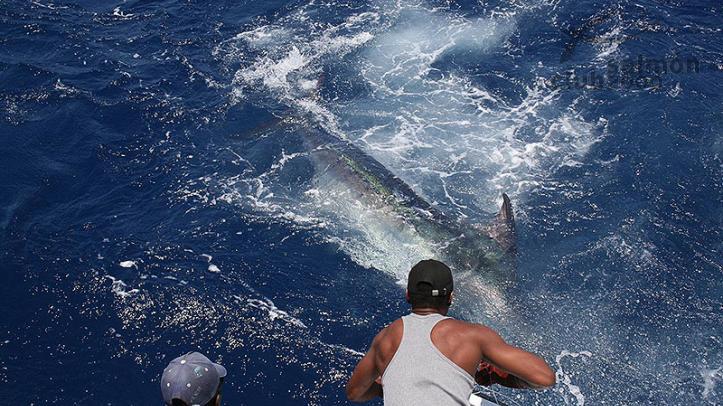 Captura de un Marlin de más de 200 kilos.
