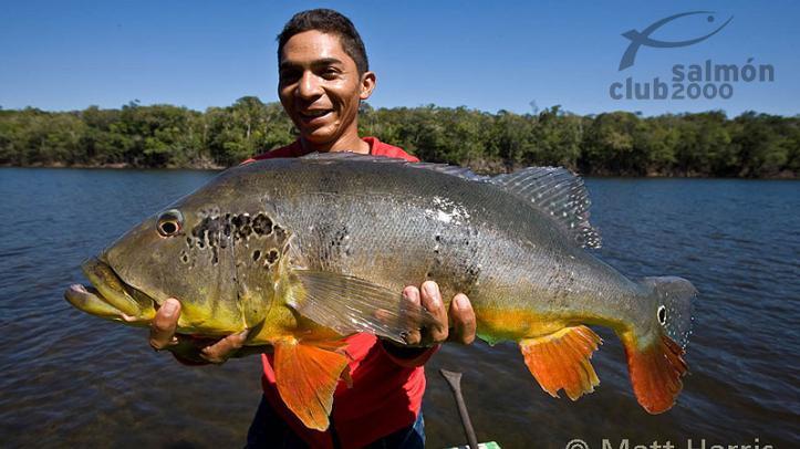 Pesca Brasil