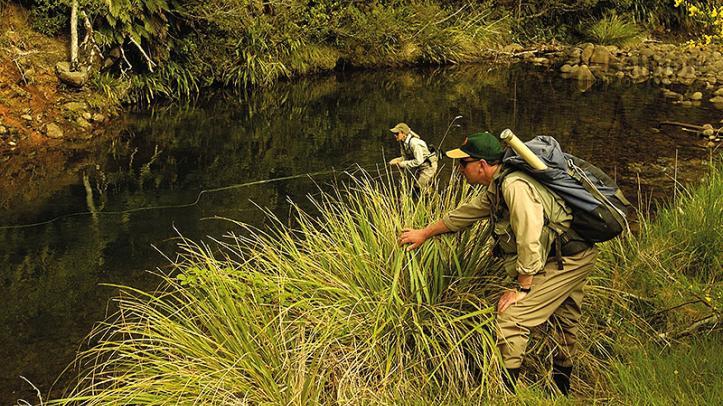Aproximación a las truchas en arroyo con Tongariro Lodge