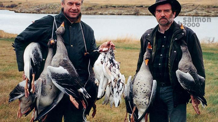 Caza de Perdiz Nival en Islandia