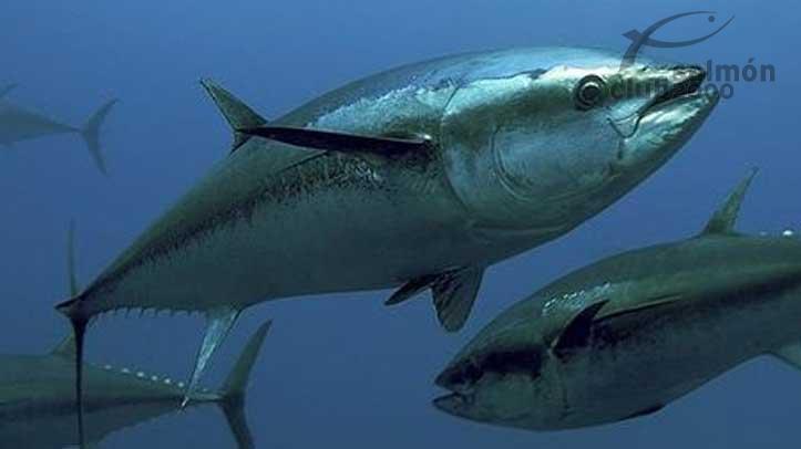 Pesca atún Barcelona