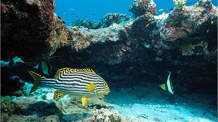 Vida submarina en el atolón Alphonse