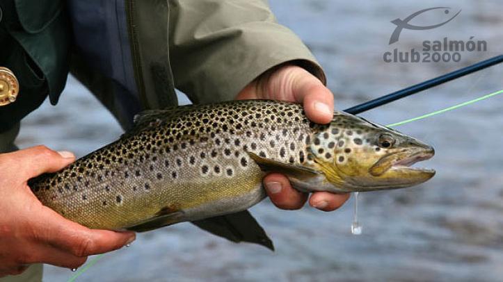 Pesca en el Río Kaitum. Campamento Tjuonajokk