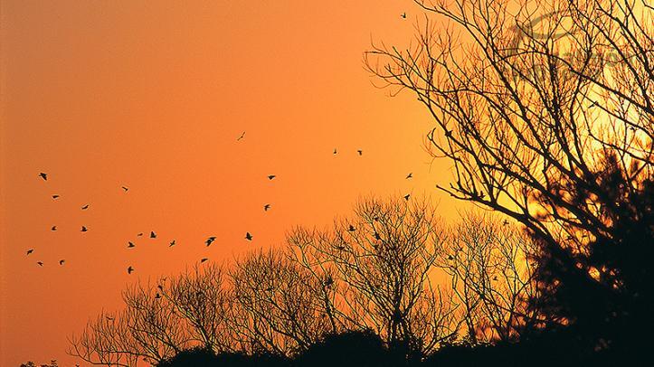 Caza de palomas y perdices en el Hasparren Lodge, Provincia de Río Negro, Uruguay.